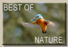 Best of